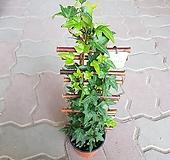 Ivy 별아이비 사다리 2021 새상품|
