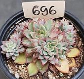 메비나0420-696|