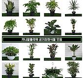 [카니발플라워]공기정화식물모음|